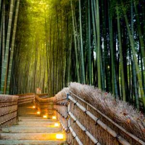 پوستر دیواری طرح جنگل بامبو