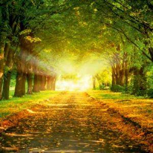 پوستر دیواری طرح جنگل و نور