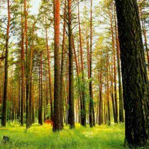 پوستر سه بعدی طرح جنگل 2
